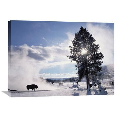 Global Gallery Nature Photographs American Bison in Winter Yellowstone National Park Wyoming by Tim Fitzharris Photographic Print on Wrapped Canvas...