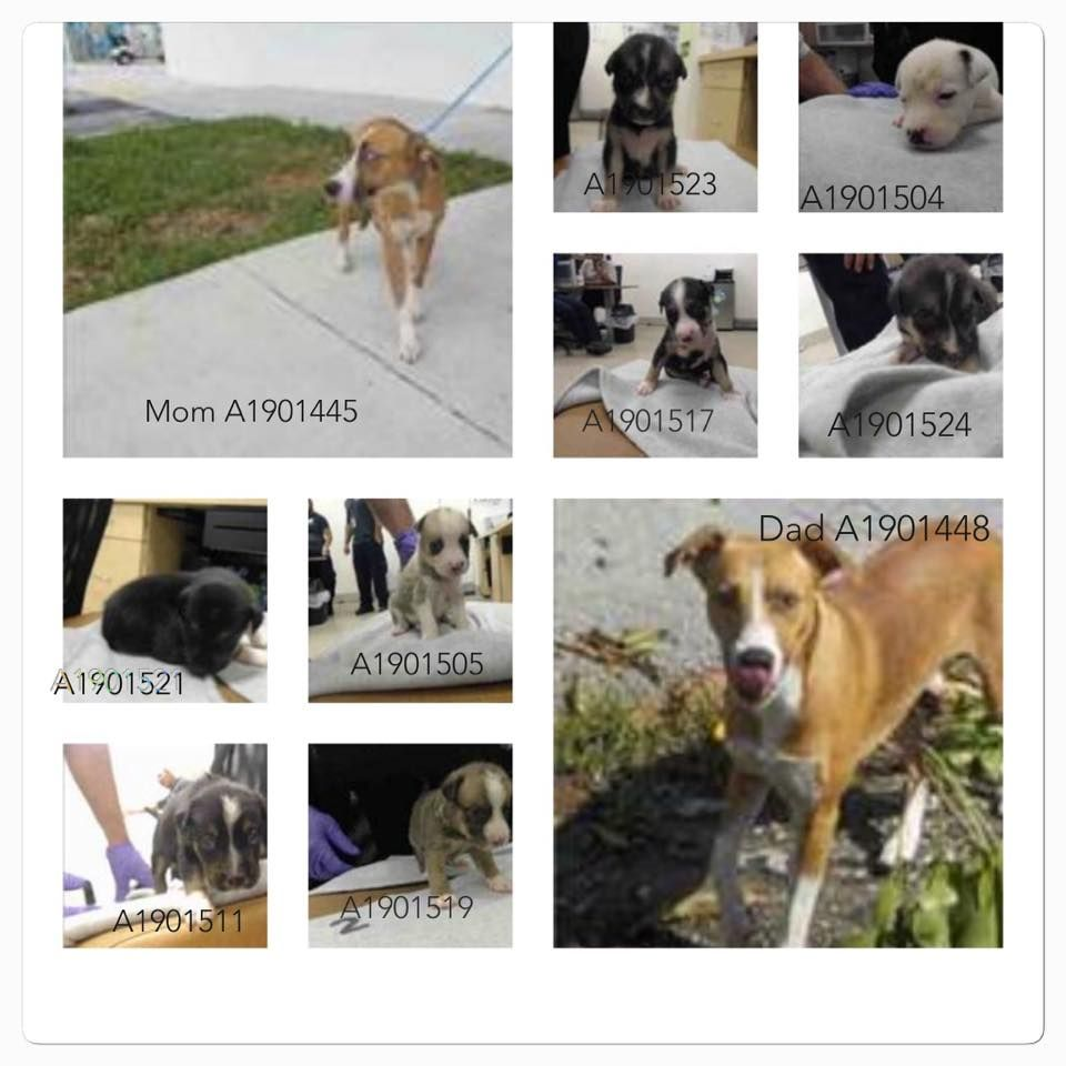 Whole Family Code Red In Florida Miami Animal Shelter Shelter