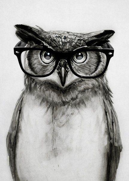 Смешные картинки сова в очках