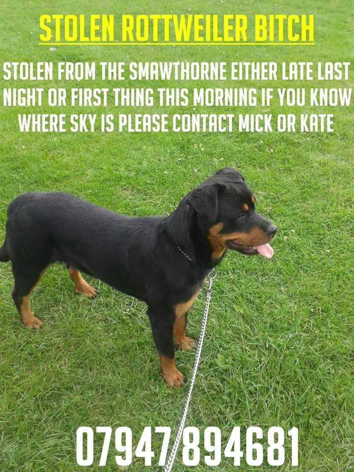 Pin by lynn mason on Pet Alert Rottweiler, Pets, You