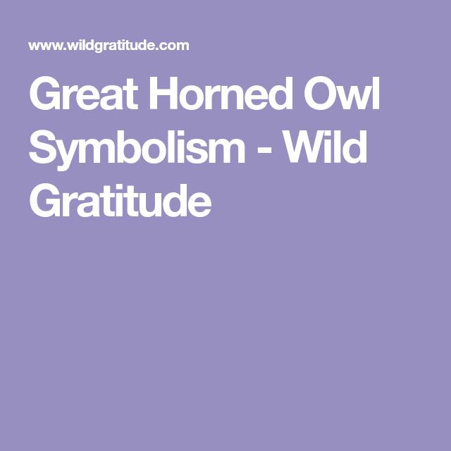 Great Horned Owl Symbolism Wild Gratitude Wisdom Pinterest