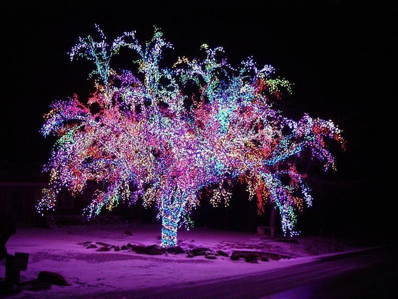 Christmas lights intense christmas light display when you have christmas lights intense christmas light display when you have only one tree aloadofball Image collections