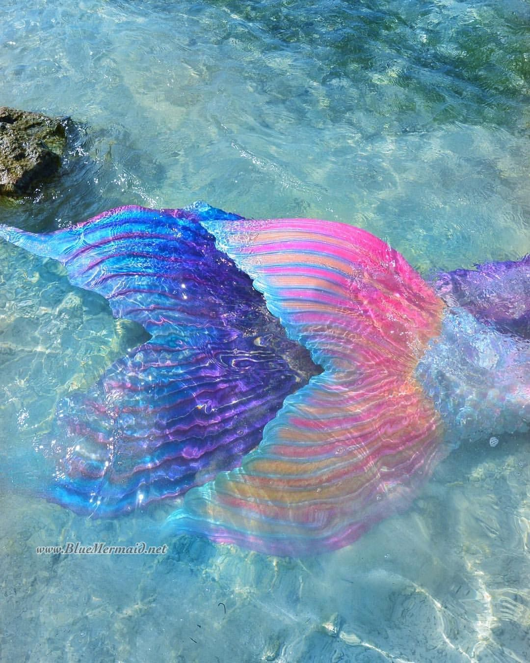 Mermaids Are Real At Blue Mermaid Designs Book For Your Event Www Mermaidsarereal Realmermaids Friends