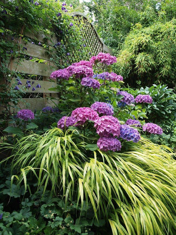 Mein Garten Im Fruhsommer Clematis Waldrebe Hortensie Graser