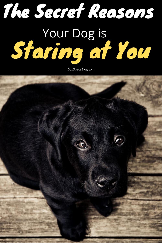Why Is My Dog Staring At Me Dogspaceblog In 2020 Black Dog Names Dog Names Unique Boy Dog Names
