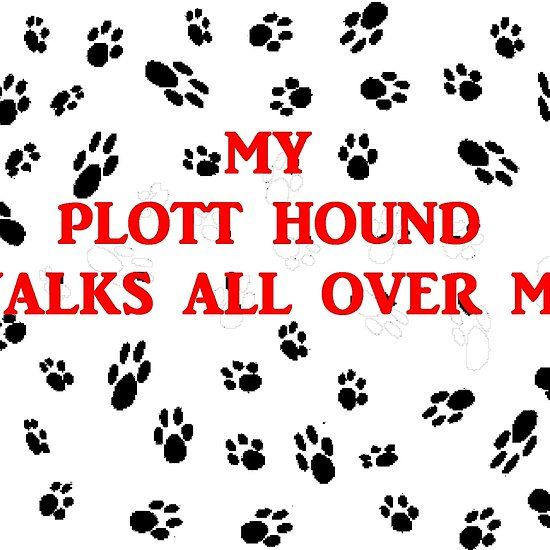 my plott hound walks all over me #plotthound