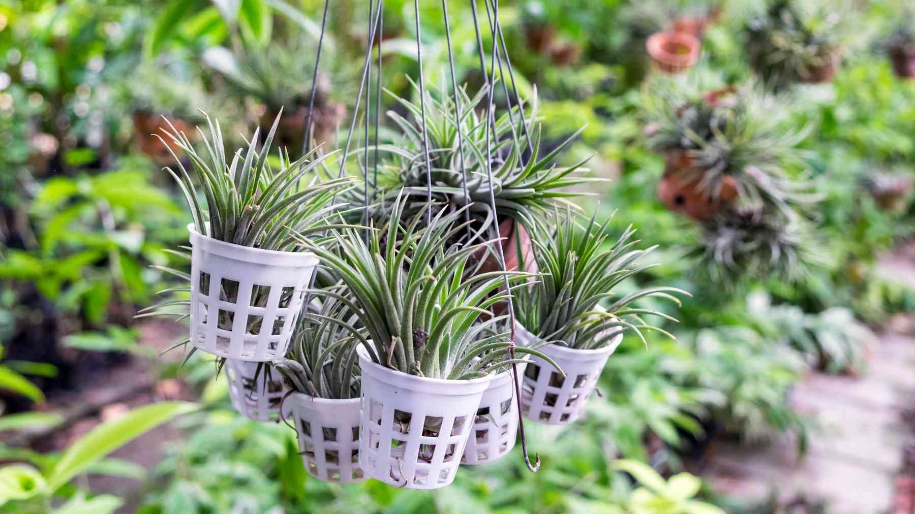 Pflanzen Im Bad Die Besten Tipps Tricks Fur Jedes Badezimmer In 2020 Pflanzen Furs Bad Luftpflanzen Luftpflanzen Pflege