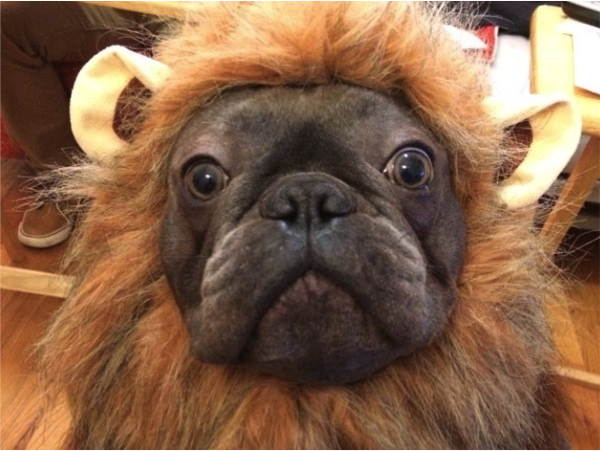 Lion Frank