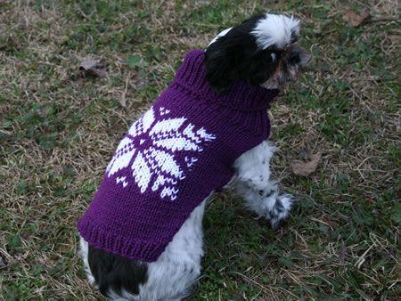 Ripley in Fair Isle sweater #dog #sweater #fairisle #rescue ...