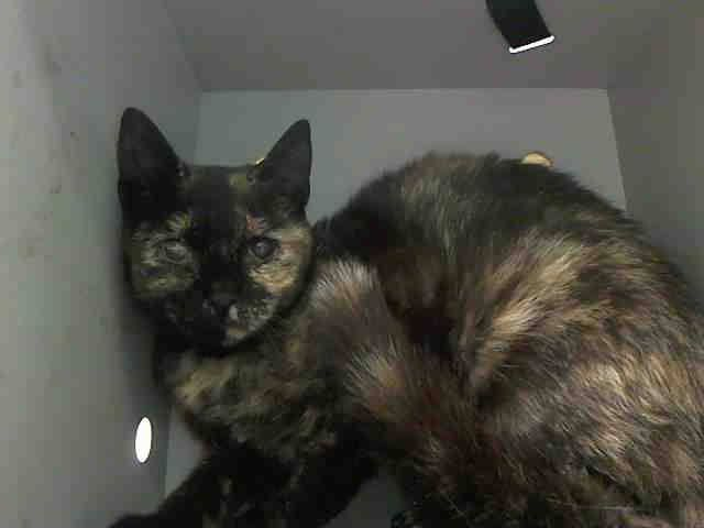 To Be Destroyed 6 20 14 Patches Is Extremely Frightened In The Shelter Please Help To Save Her Life Tonight Foster Adopt To Pledge Now Brooklyn Center