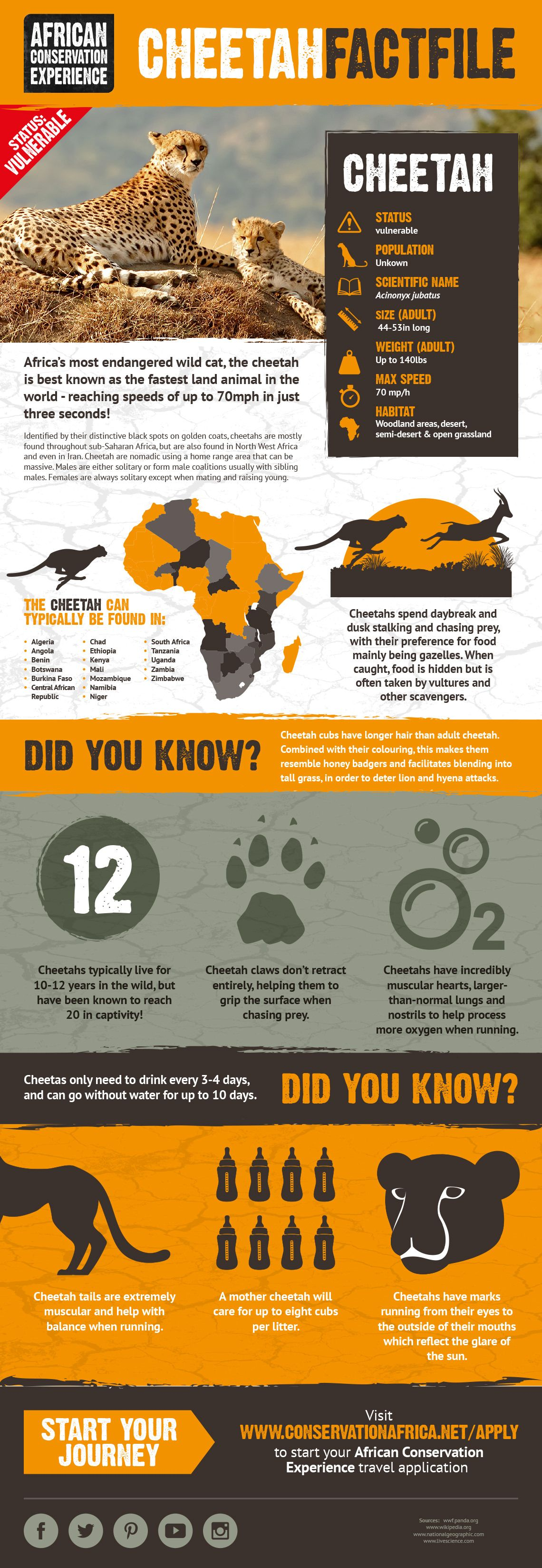 Get some facts and figures on cheetah. #cheetah #wildlifefacts ...