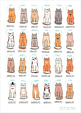 I think my cat friends would love this... @Kate Roebuck @Laura Roebuck @margaret haas