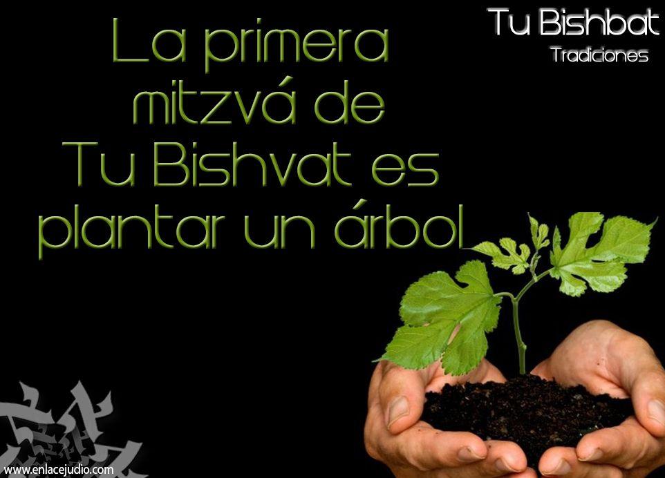La primera mitzvá de #TuBishvat es plantar un árbol.
