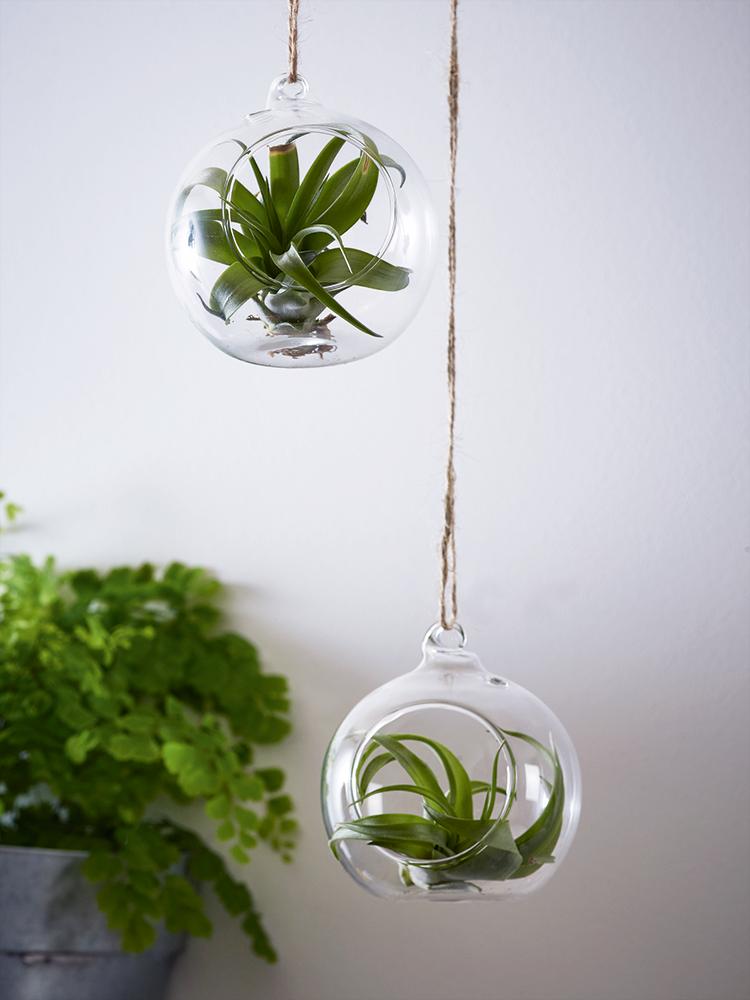 NEW Air Plant Ornament Indoor Planting Decorative Home