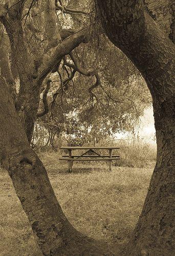 Natural framing in photography