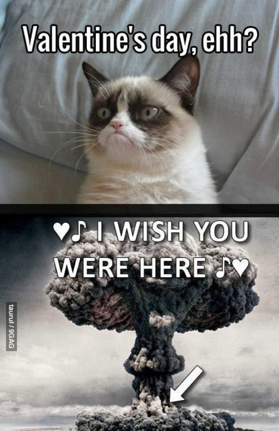 Grumpy Cat Valentines Day Grumpy Cat Humor Grumpy Cat Meme Funny Grumpy Cat Memes