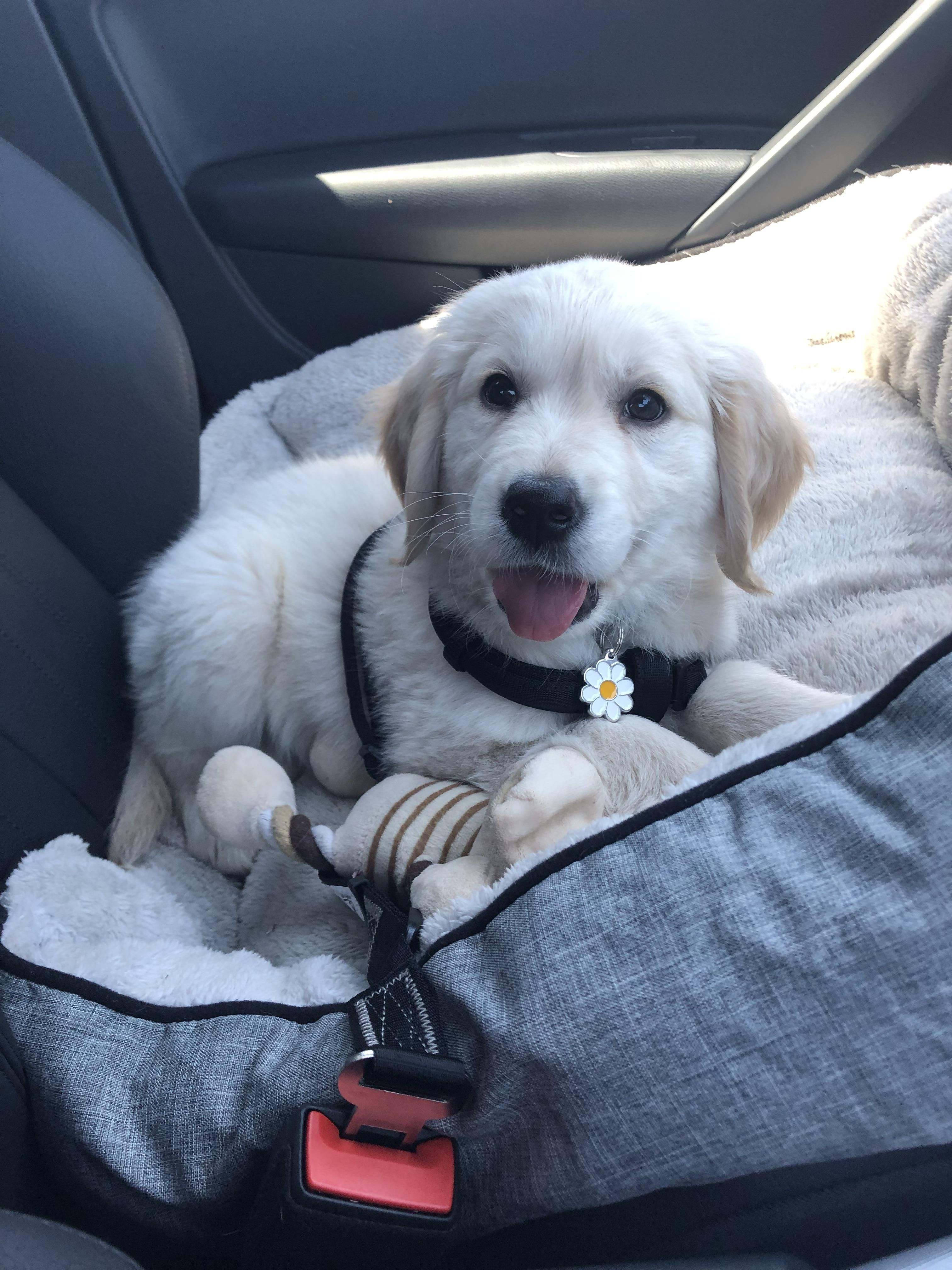 Frankie is ready for his first day at puppy school with