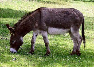 Donkey Photo Credit: https://commons.wikimedia.org