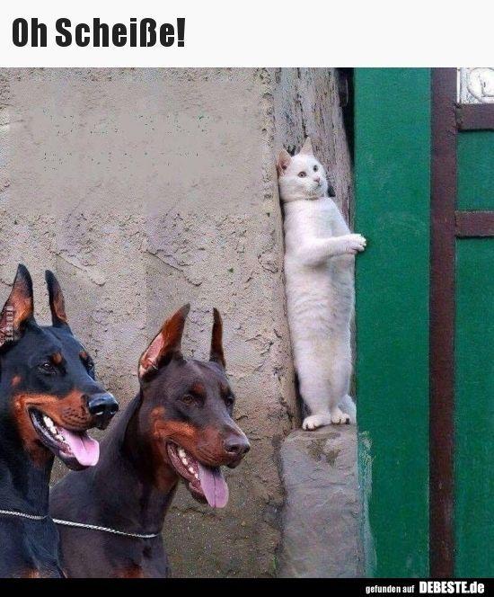 Photo of Oh Scheiße! ..   Lustige Bilder, Sprüche, Witze, wirklich lustige süße Katzen #cats – Katzen
