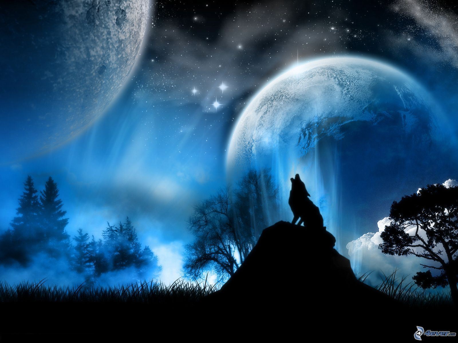 Lobo Aúllando: Lobo Aullando A La Luna...