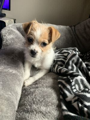 Dogs For Adoption Near Fennimore Wi Petfinder Dog Adoption Pet Adoption Dogs