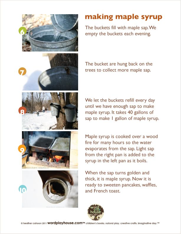 Forty Gallons Of Sap How To Make Maple Syrup By Wordplayhouse Sugaring