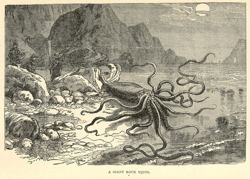 A giant rock squid