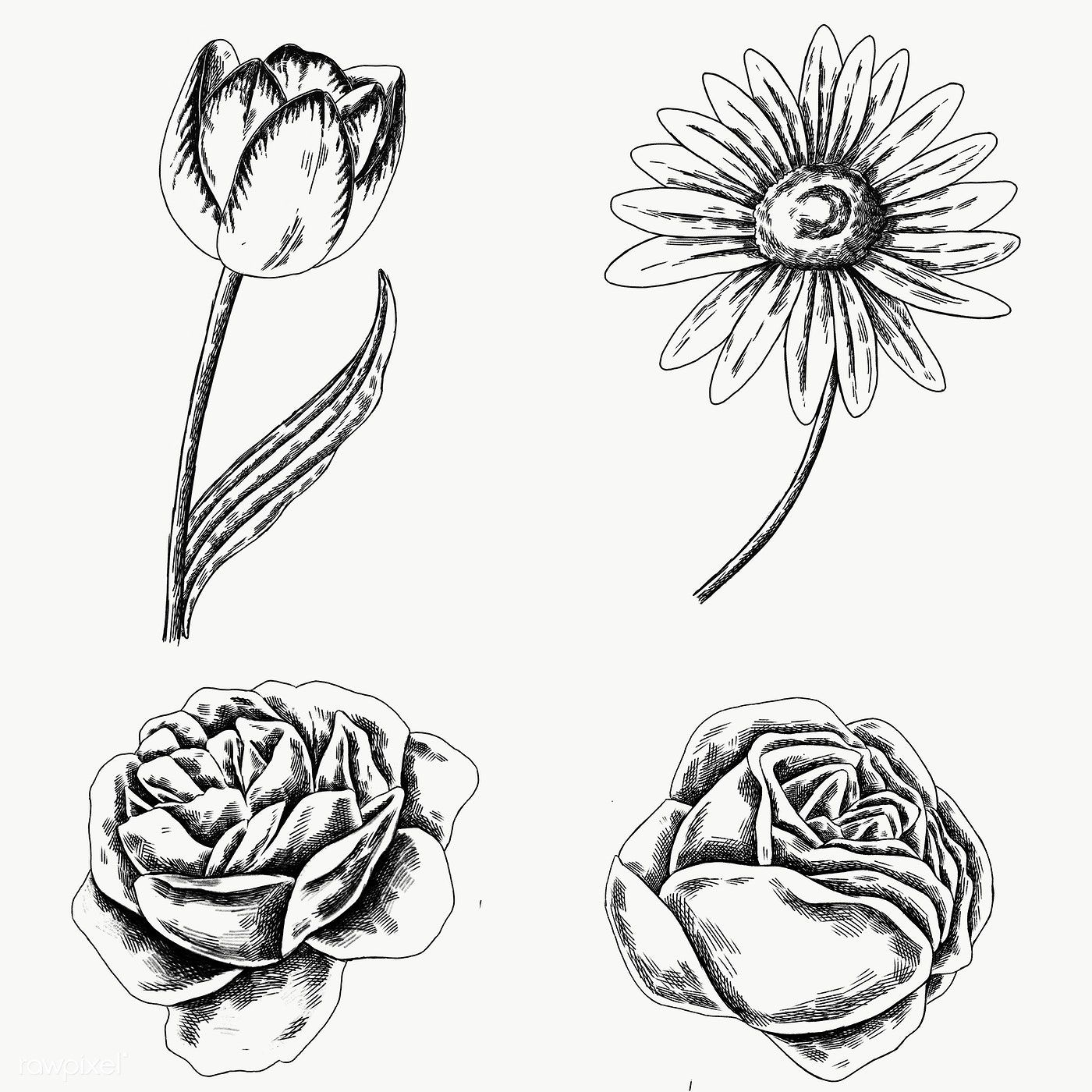 Download Premium Png Of Vintage Flower Drawing Set Transparent Png 2091337 In 2020 Flower Drawing Vintage Flowers Drawing Set
