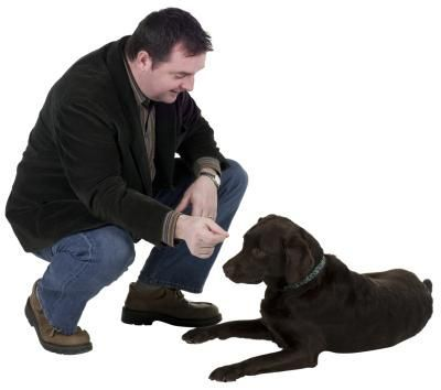 Pin On Teach Your Dog How To