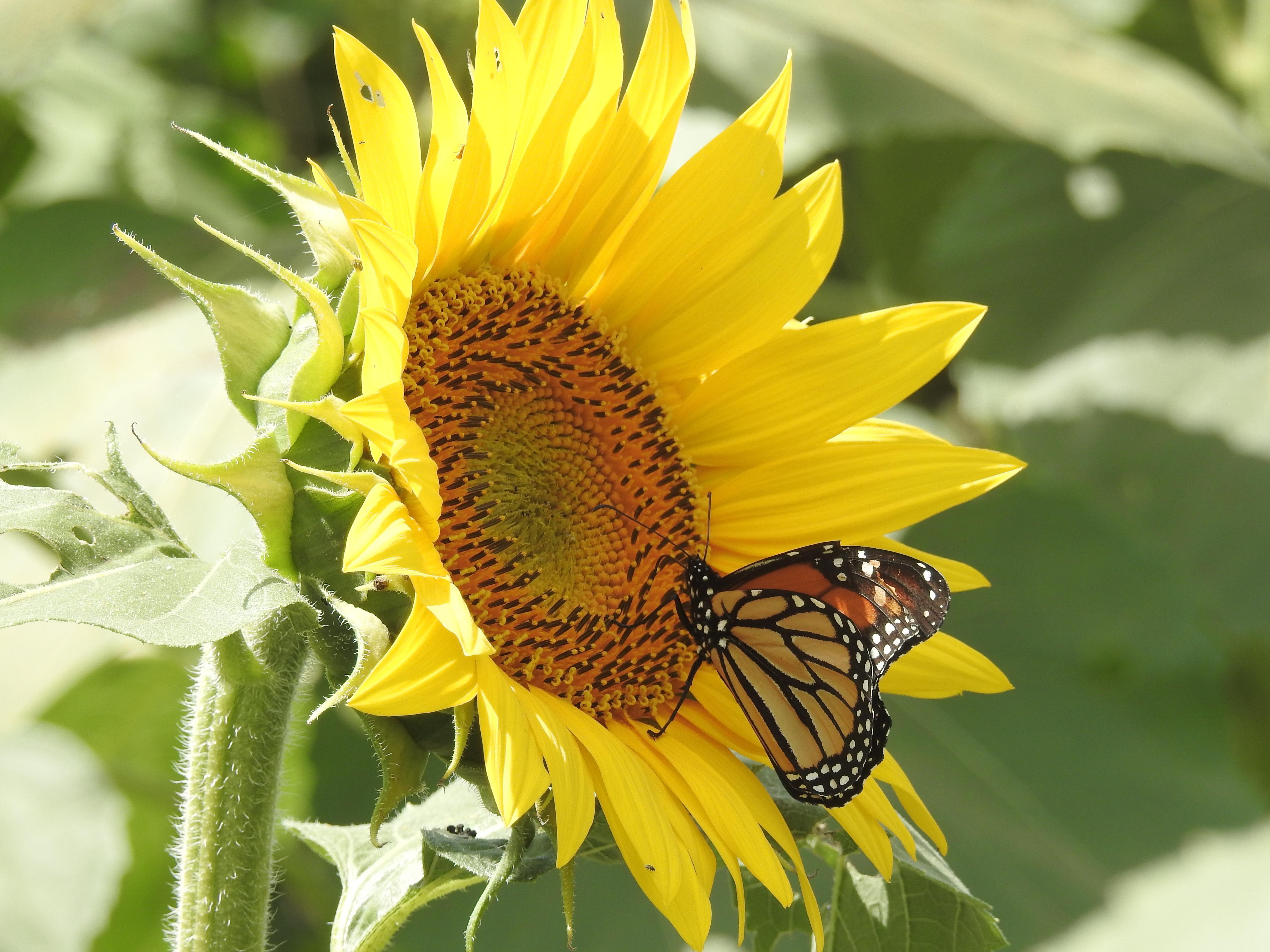 Pin By Robert Terrell On Butterflies Amp Moths