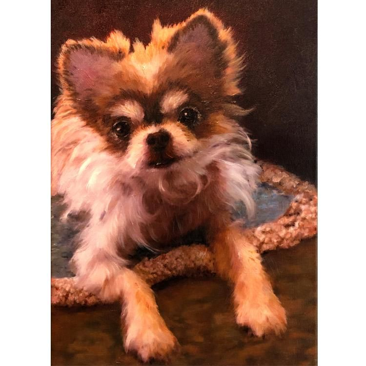 Portrait Of A Long Haired Chihuahua In 2020 Cute Little Dogs Chihuahua Pitbull Mix