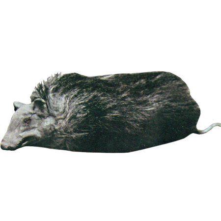 Rats Prop Halloween Decoration, Men\u0027s, Multicolor Rats, Walmart - walmart halloween decorations
