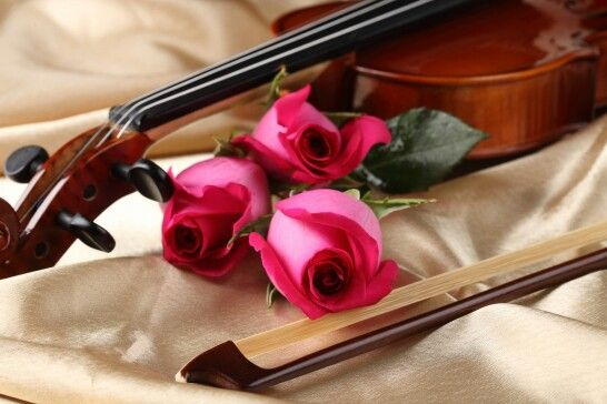 Roses And Violin Flowers Pinterest Rose Music And Flowers
