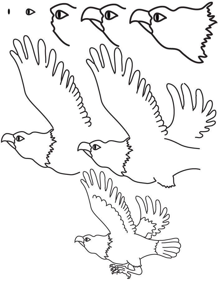Drawing Eagle Dessin Aigle Dessin Mouton Dessin