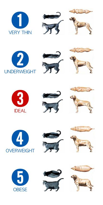 Obesity Is A Problem With Our Pets Learn What Is Normal And What