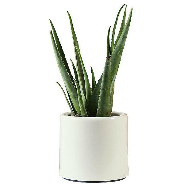 Pad Outdoor Arro Basso Planter ($152) ❤ liked on Polyvore featuring home, outdoors, outdoor decor, plants, fillers, flowers, decor, flower stem, outdoor planters and outside garden decor