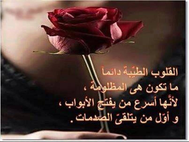 القلوب الطيبة Flowers Rose Art