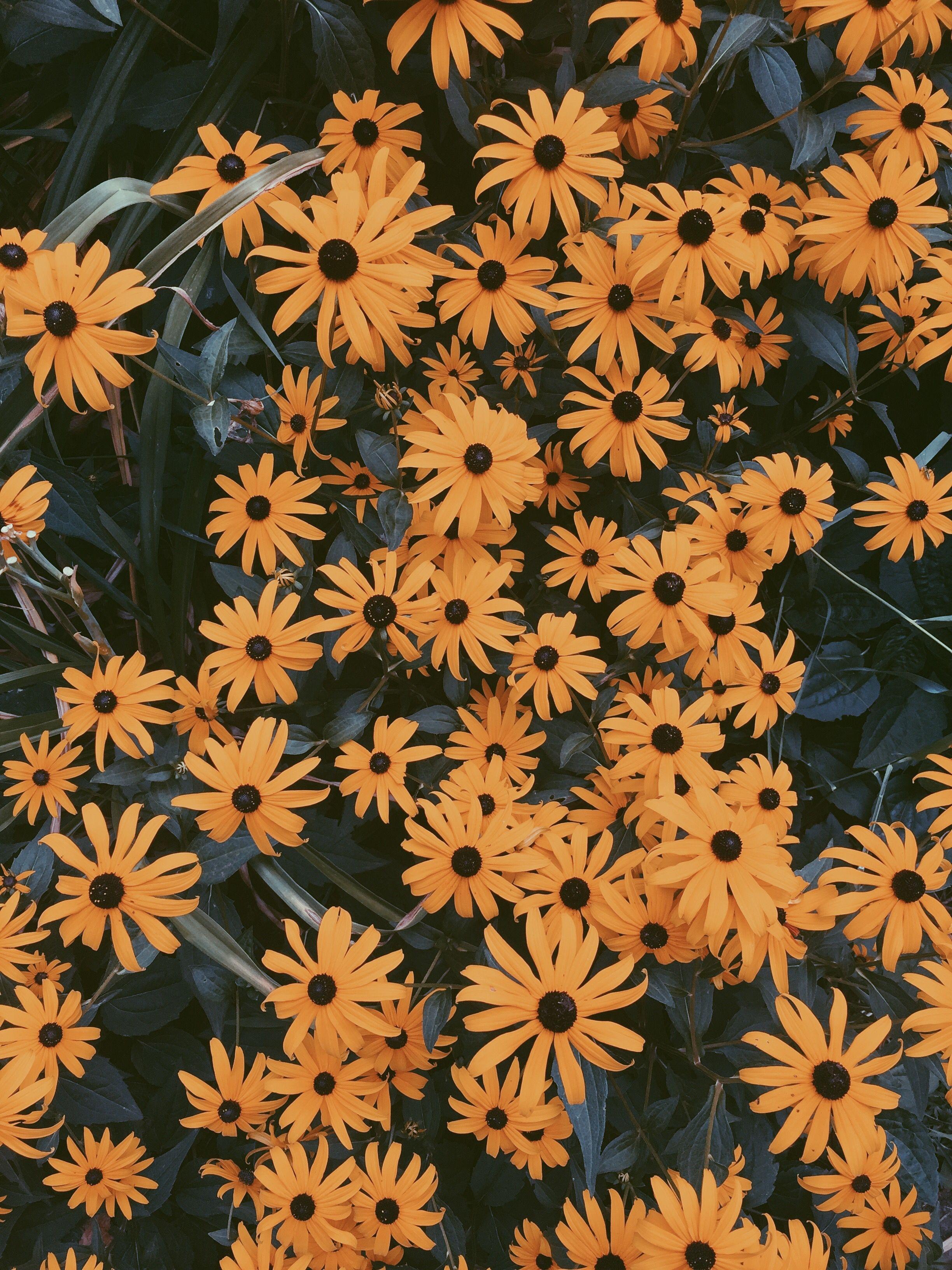 pinterest// joyful_grace Flower aesthetic, Yellow