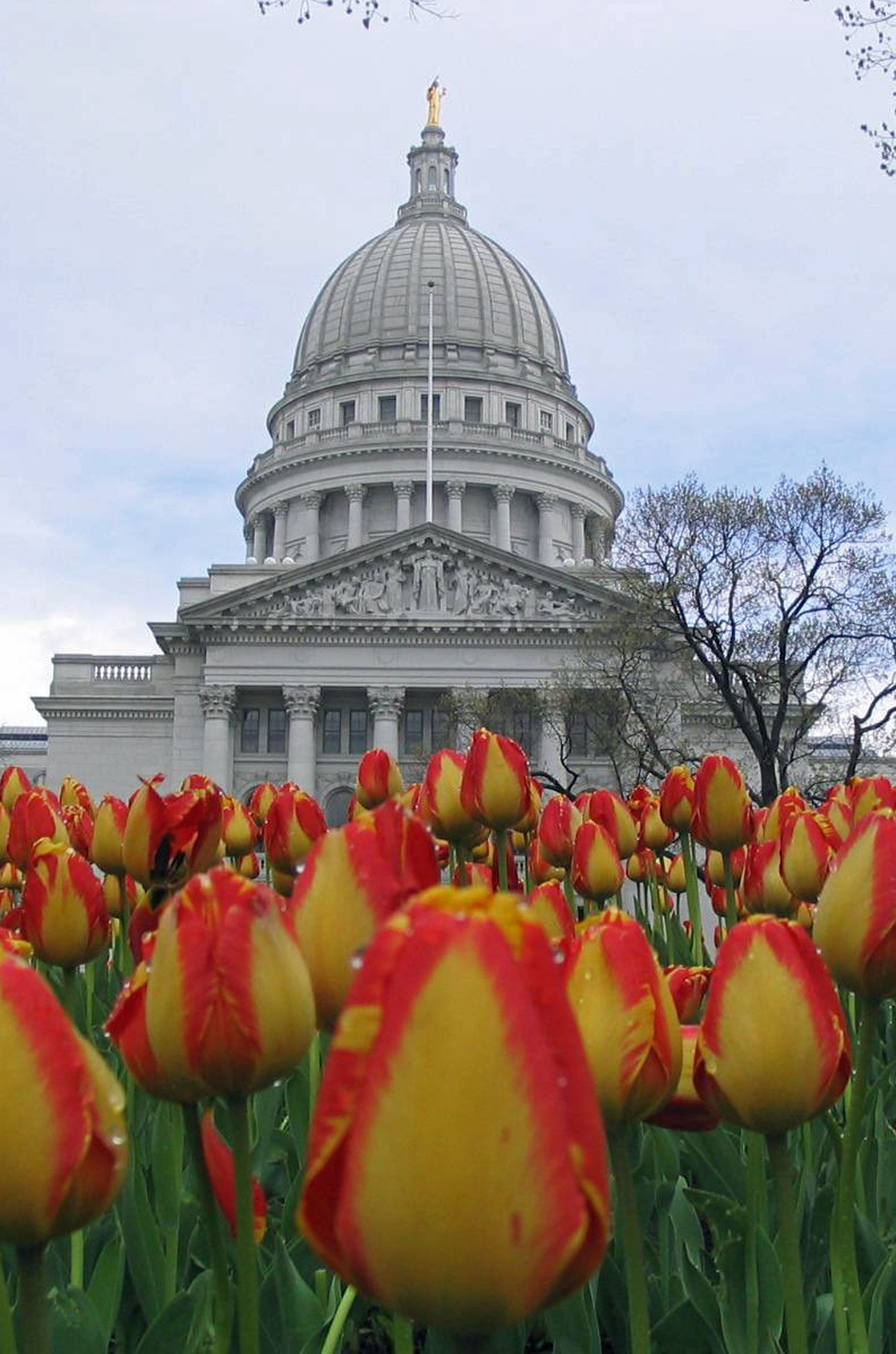 Tiptoeing Through Tulips After Madisons >> 30 Photos Of Madison That Will Make You Want To Move There Go