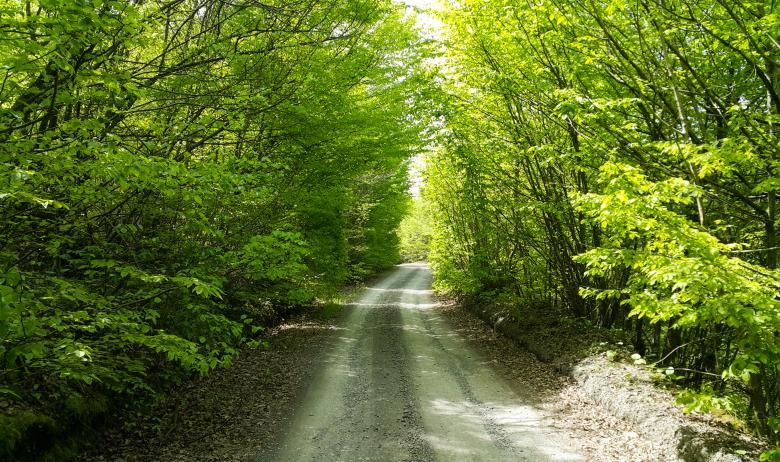 Free stock photo of road through green forest forest