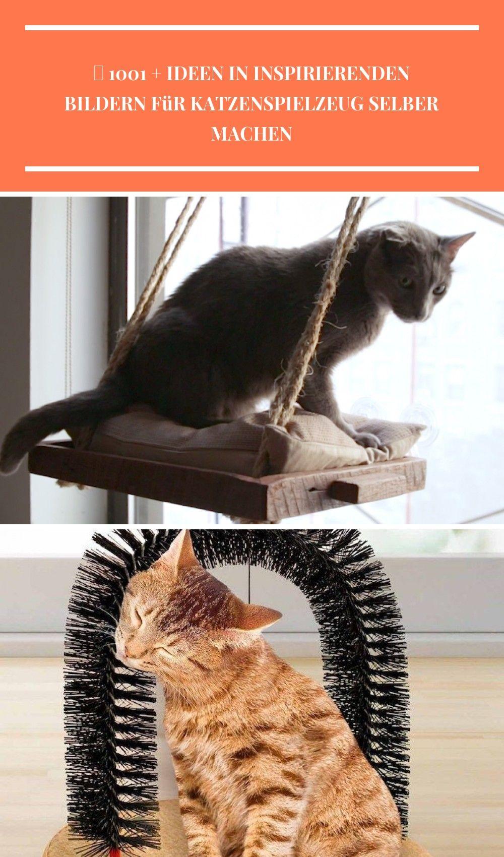 Diy cat window perch katzen diy with images cat window