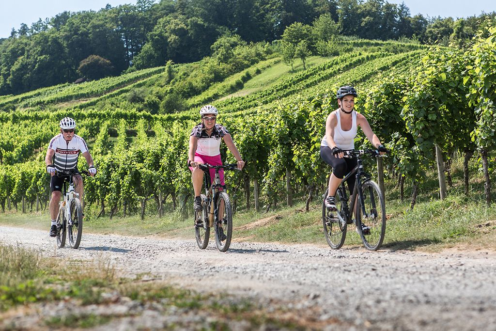 Der Württemberger Weinradweg – Radfahren auf den Spuren der