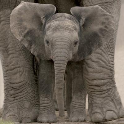 An elephant never forgets.