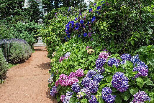 Venetia Featherstone-Witty - Buenos Aires Botanical Garden #flowers ...