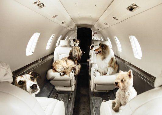 Tokenpet On Private Jet Pet Travel Pet Transport
