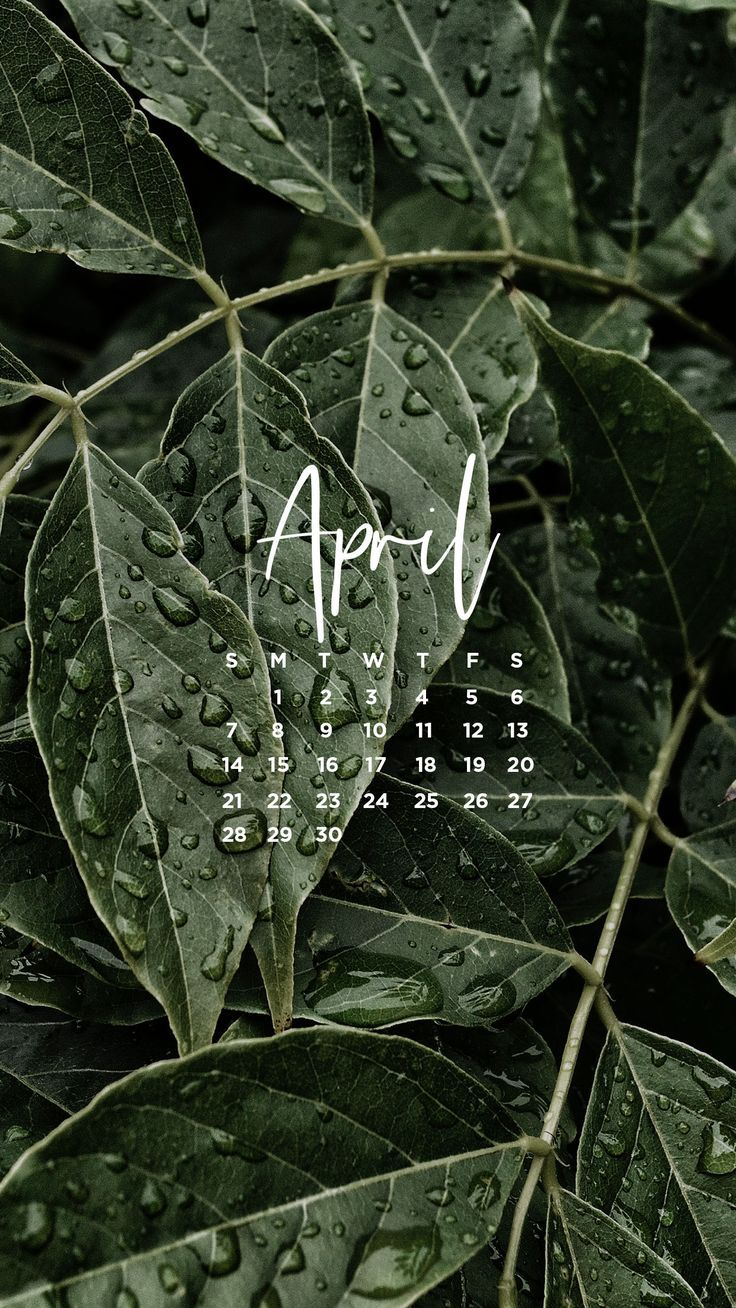 Get your free April desktop and mobile wallpaper. April showers bring may flower themed. A freebie design created by Alex Cook