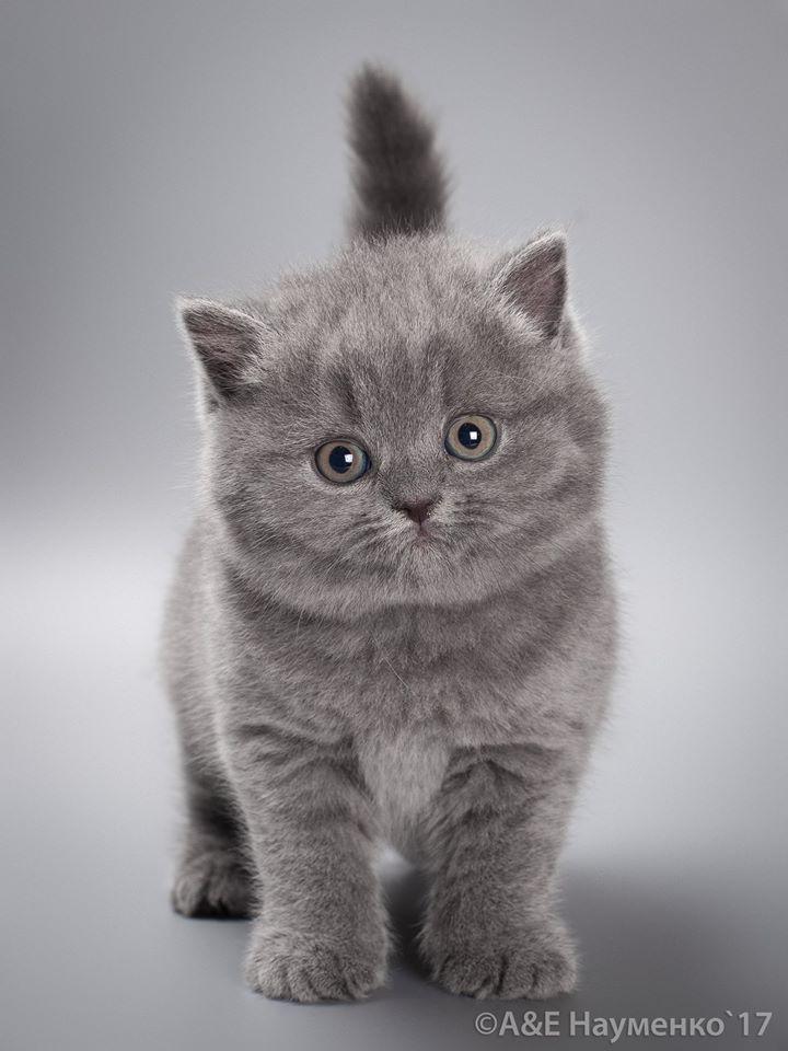 Bless Just Imagine How Soft Fluffy Ooo Gatos Bonitos Animales Domesticos Divertidos Gatitos Lindos