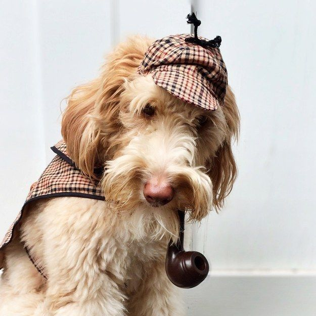 27 Insanely Clever Halloween Costumes For Your Dog Pet Halloween