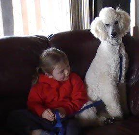 Khalsa Permanent Registered Standard Poodles Ckc Registered