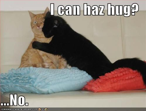 Funny Meme About Missing Someone : Lolcat lolcat valentines day animal memes cat